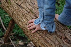 tree-725687_640